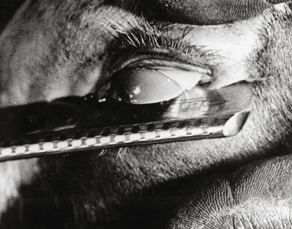 """Luis Buñuel/Salvador Dali, """"Un chien andalou"""" (Der andalusische Hund)«, Filmplakat 1928, Quelle: AKG Images 481853 © mit freundlicher Genehmigung"""